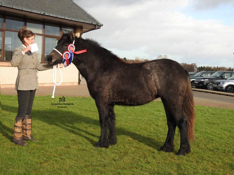 Pony Show Results