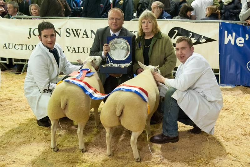 Champion Sheep