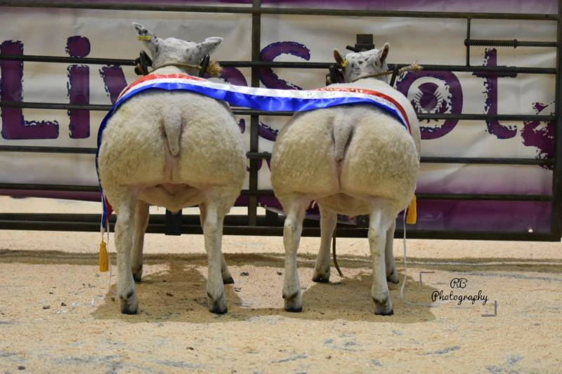 LiveScot Overall Champion Sheep - John Guthrie