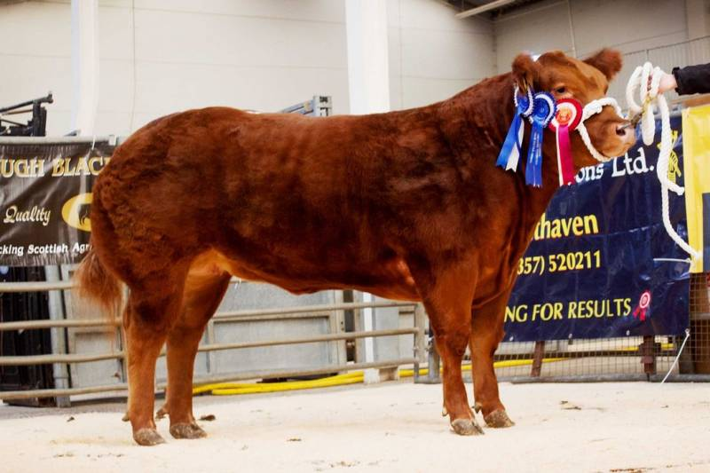 LiveScot 2020 Reserve Overall Cattle Champion